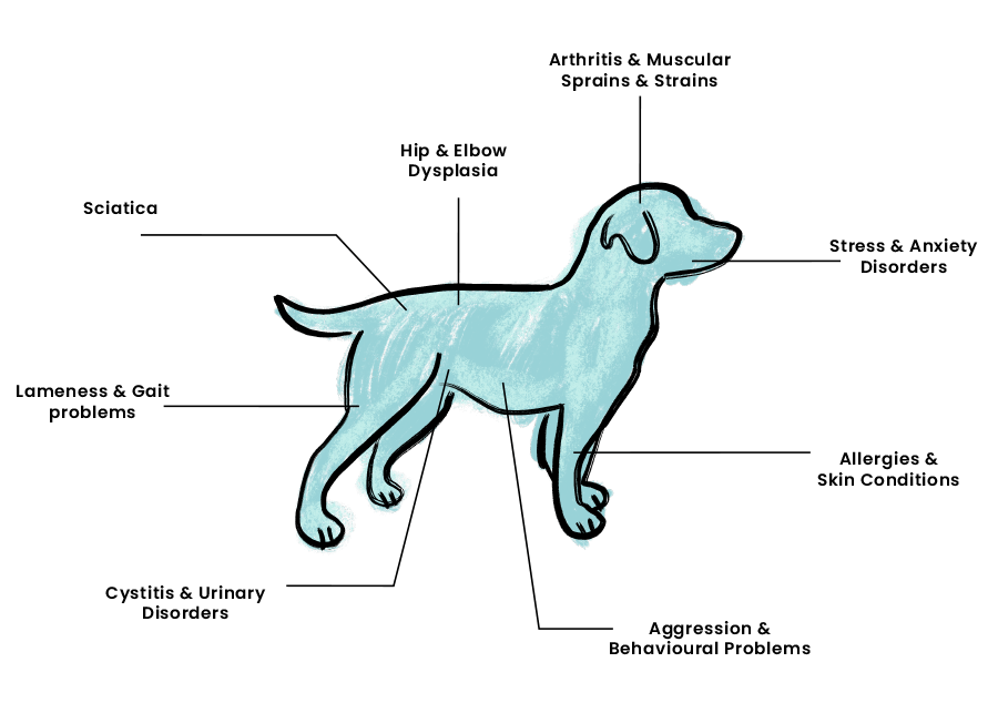 bowen dog diagram