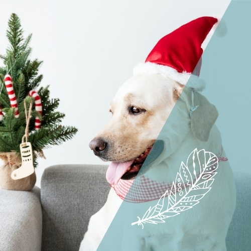 Keeping Your Pets Calm At Christmas
